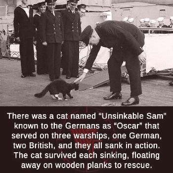 Clearly the cat was responsible for each one cat; cats; cat lovers; cat of the day; cat walk; cat l